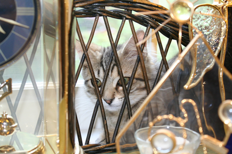 Cat peeking through a wicker shelf during an inventory